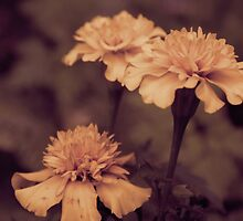 marigolds in sepia by CecilysSong