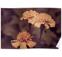 marigolds in sepia Poster