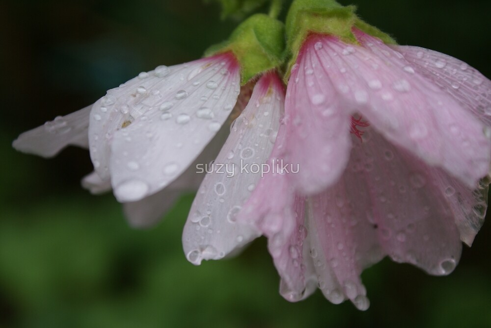 holly hocks in the rain (4) by CecilysSong