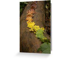 Autumn Leaf Trail Greeting Card