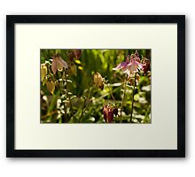 aquilegia patch Framed Print