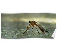 Bug on Asphalt Poster