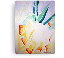 Daffs at 9 Canvas Print