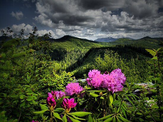 Might Be A Dream by Charles & Patricia   Harkins ~ Picture Oregon