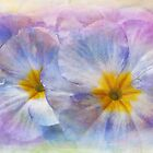 primula by Teresa Pople