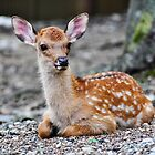 Bambi by Robyn Meyer