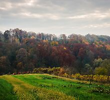 Colorful forest at fall rural landscape photo by Mario Cehulic