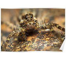 Wolf spider arachnid extreme macro Poster