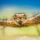 Crab spider extreme closeup by Mario Cehulic