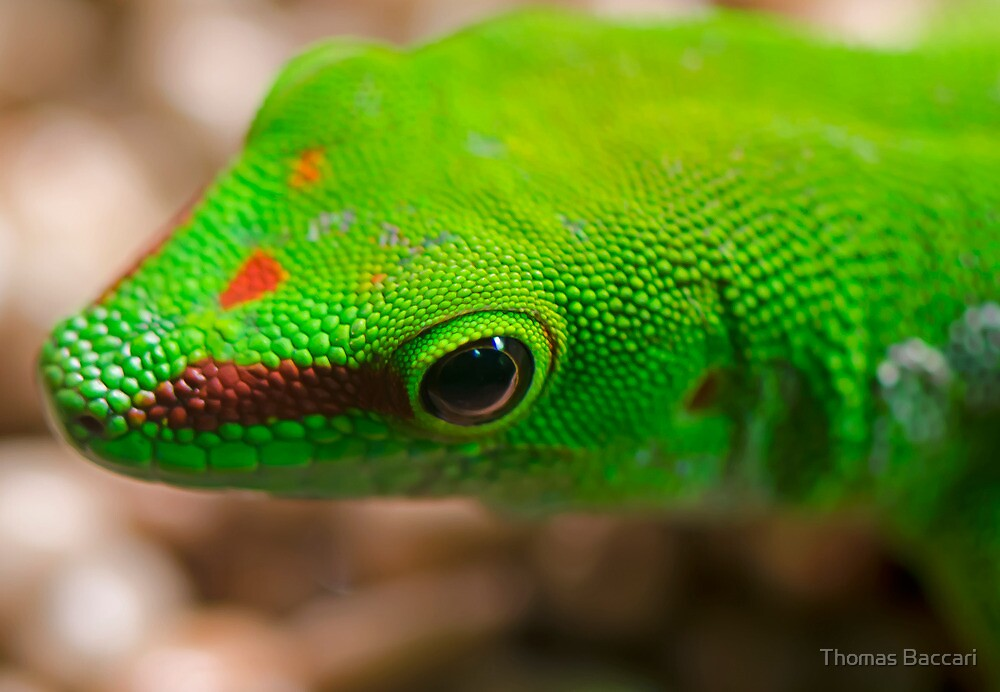 My Very Little Lizard Friend by imagetj
