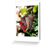 Butterfly Yoga Greeting Card