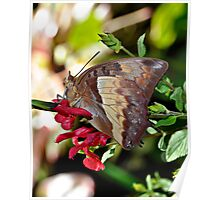 Butterfly Yoga Poster