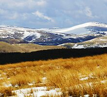 Snow On The Cheviot Hills Northumberland by Roger Hall