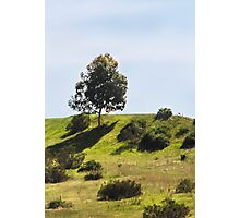 Solitary Tree On the Hill Photographic Print
