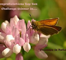 Top Ten Challenge Winner Banner - Closeups in Nature by Gillian Marshall