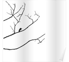 Bird on a Branch Poster