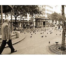 Pigeons Flock the Park Photographic Print