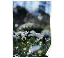 Flower level Poster