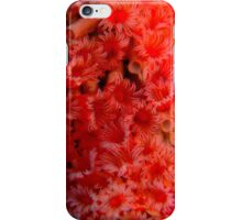 Red tube worms feeding iPhone Case/Skin