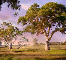 Mt Barker, Adelaide Hills SA by Mark Richards