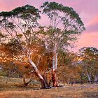 Nairne, Adelaide Hills SA by Mark Richards