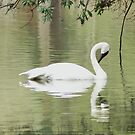 The White Swan by Widcat