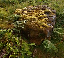 Stone and Moss by kalaryder