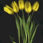 (Very) Yellow Tulips by Barbara Wyeth