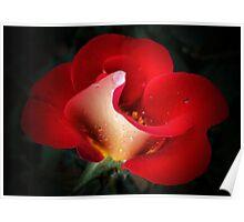 Rose Bolero Poster