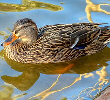 Duck by George Lenz