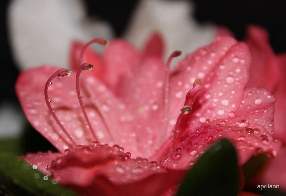 Rain on the Azaleas by aprilann