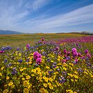 Spring Bouquet at Warner Springs by photosbyflood