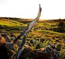 Dead Branch by Tom Blanche