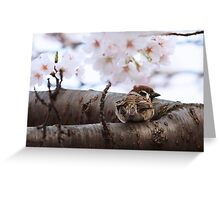 Sparrow Perches in a Sakura Tree Greeting Card