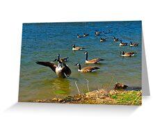 Geese Sitting on Lake Greeting Card