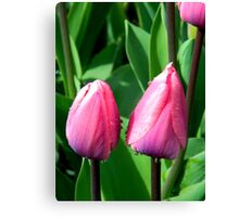 Pink Two Lips Canvas Print