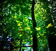 Forrest Canopy by Nazareth