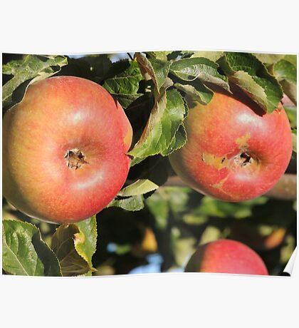 Red Red Apples Poster