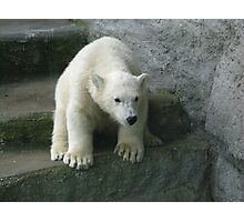 Polar Bear Cub Photographic Print
