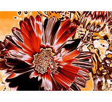 flaming star // abstract flower Photographic Print