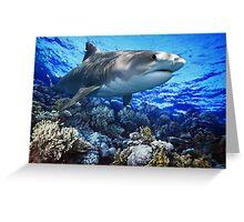 TIGER SHARK Galeocerdo cuvier (POSTER VERSION) Greeting Card