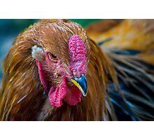 cocky chicken Photographic Print