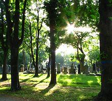 Zentralfriedhof by Stephen Oravec