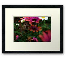 Flowers in the sun Framed Print