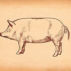 Butcher's Pig line illustration by digestmag