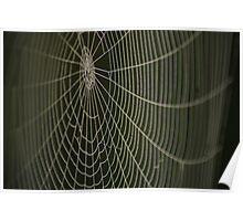 Dew drop spider-web Poster