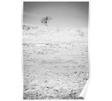Little Tree on the Hill - Black and White Poster