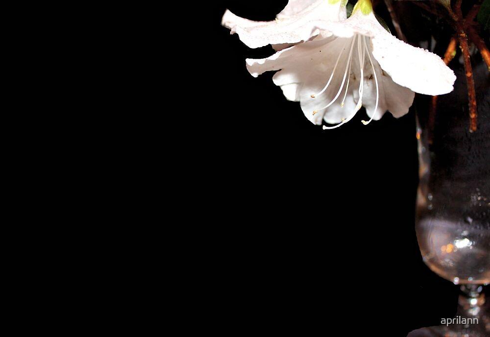 My White Azalea by aprilann
