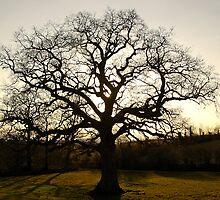 Rydon Oak, April 2013  by Mike  Waldron