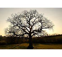 Rydon Oak, April 2013  Photographic Print